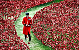 Poppies lie in Tower of London moat to commemorate WW1 victims ...epa04337535 A bemedalled Chelsea Pensioner walks amongst red poppies in the moat at the Tower of London in London, Britain, 01 August 2014. The Tower of London moat is slowly turning red as some 888,246 ceramic poppies are planted in memory of the British and Commonwealth dead from World War I. The year 2014 sees the 100th anniversary of the beginning of WWI, or the Great War, which according to official statistics cost more than 37 million military and civilian casualties between 1914 and 1918. EPA/ANDY RAIN